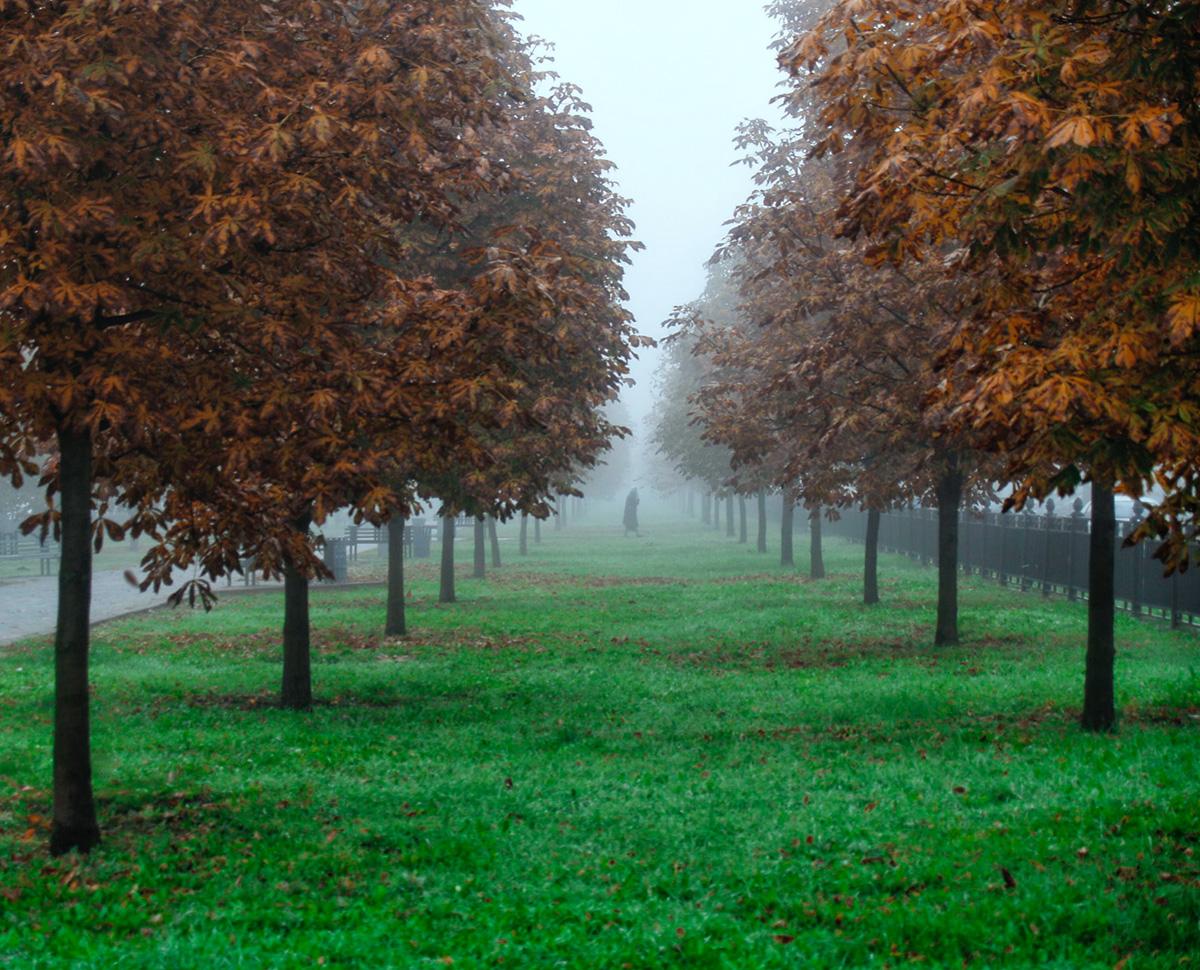 20140925-fog2.jpg