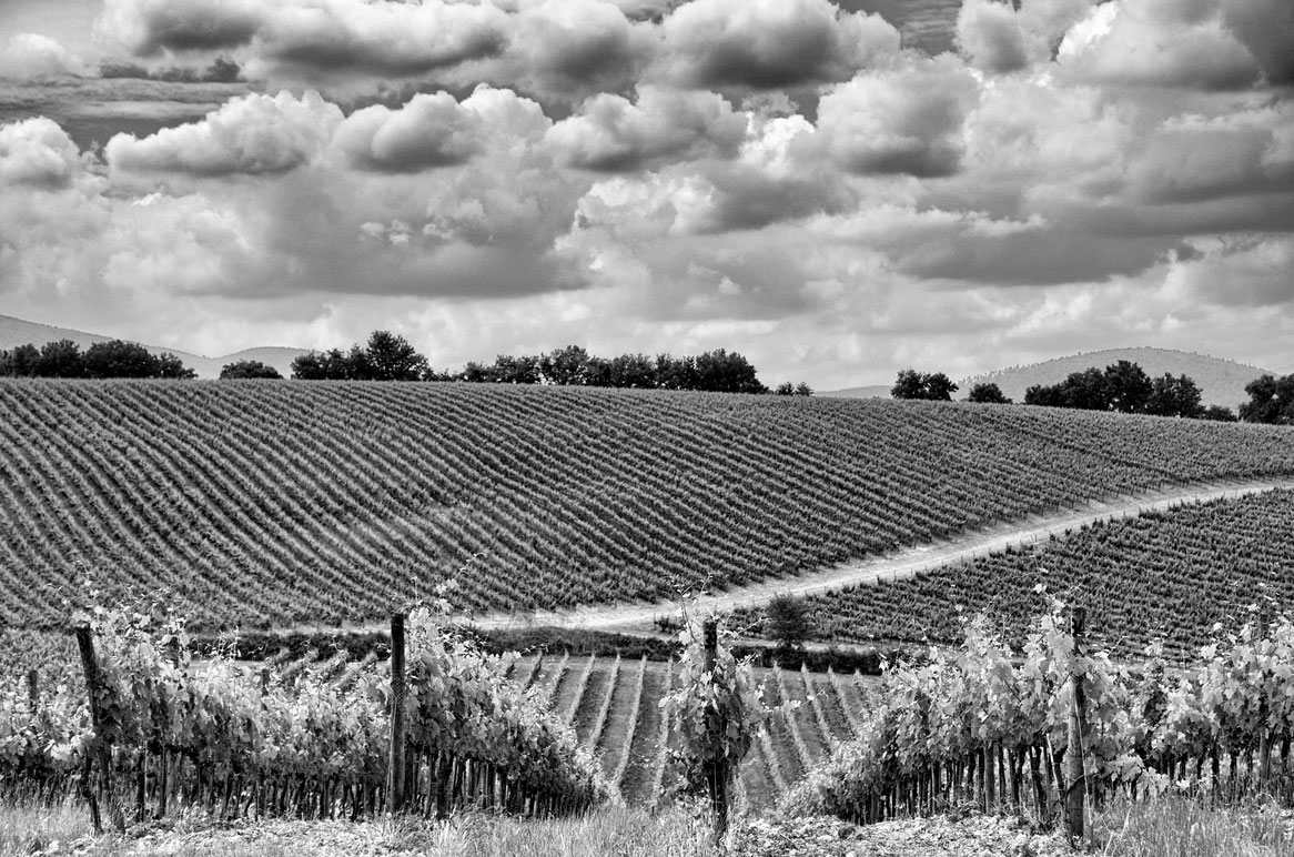20140928-vineyard1.jpg