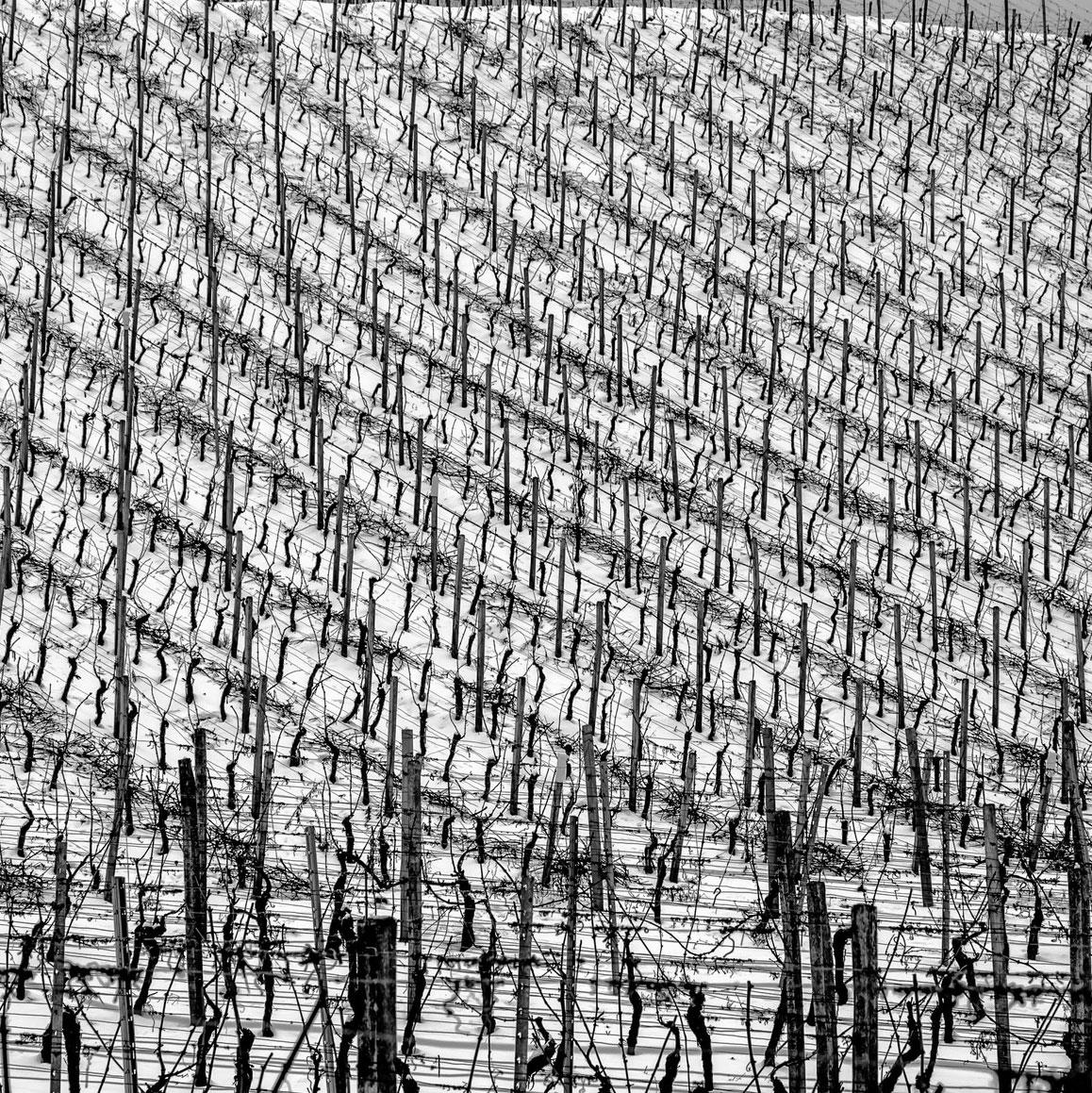 20140928-vineyard2.jpg