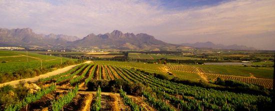 Kóstold meg Dél-Afrikát! - Exkluzív tárlatvezetés és dél-afrikai borkóstoló a Pieter Hugo kiállításon