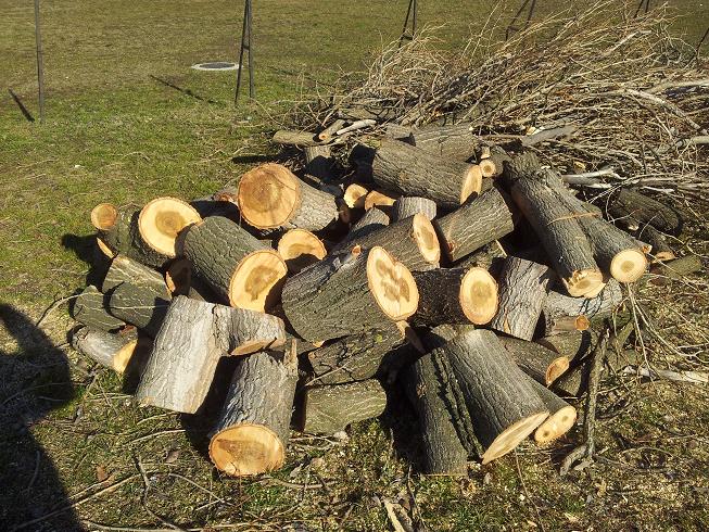 Az életveszélyes, kiszáradt fák rönkjei.