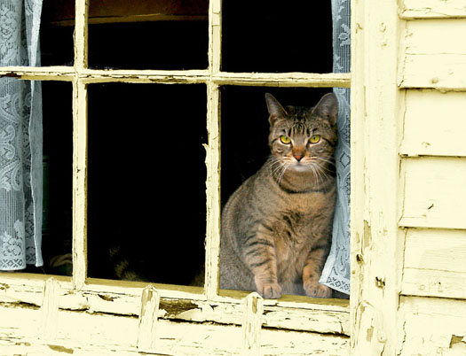 macska az ablakban.jpg