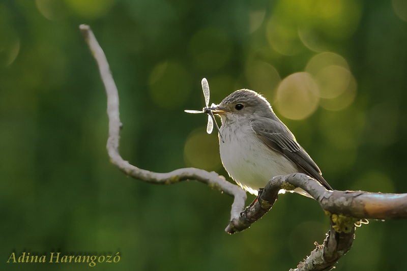 http://m.cdn.blog.hu/ma/madarpark/image/DSC_3011-bird.jpg