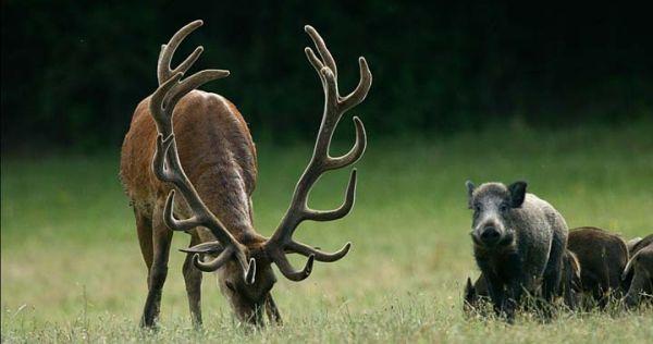 vadászat.jpg