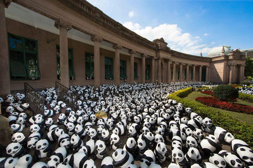 panda07.jpg