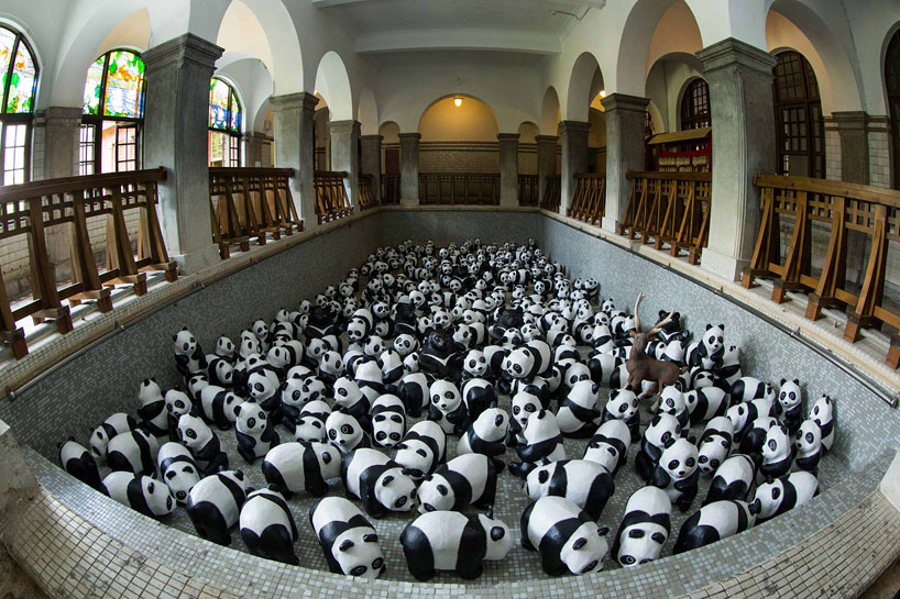 panda09.jpg