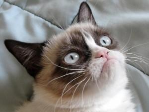 hogyan lehet pénzt keresni egy macskában)