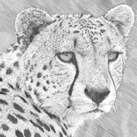 gepard_logo.jpg