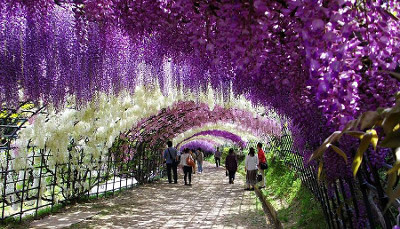 Virágalagút Japánban