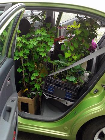 virágokkal teli kocsi