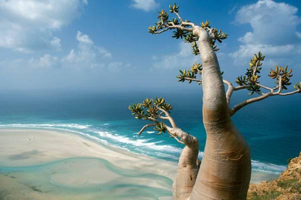 Socotra-In-Yemen.jpg