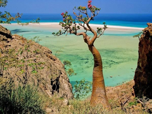 Socotra-island-thesuiteworld.jpg