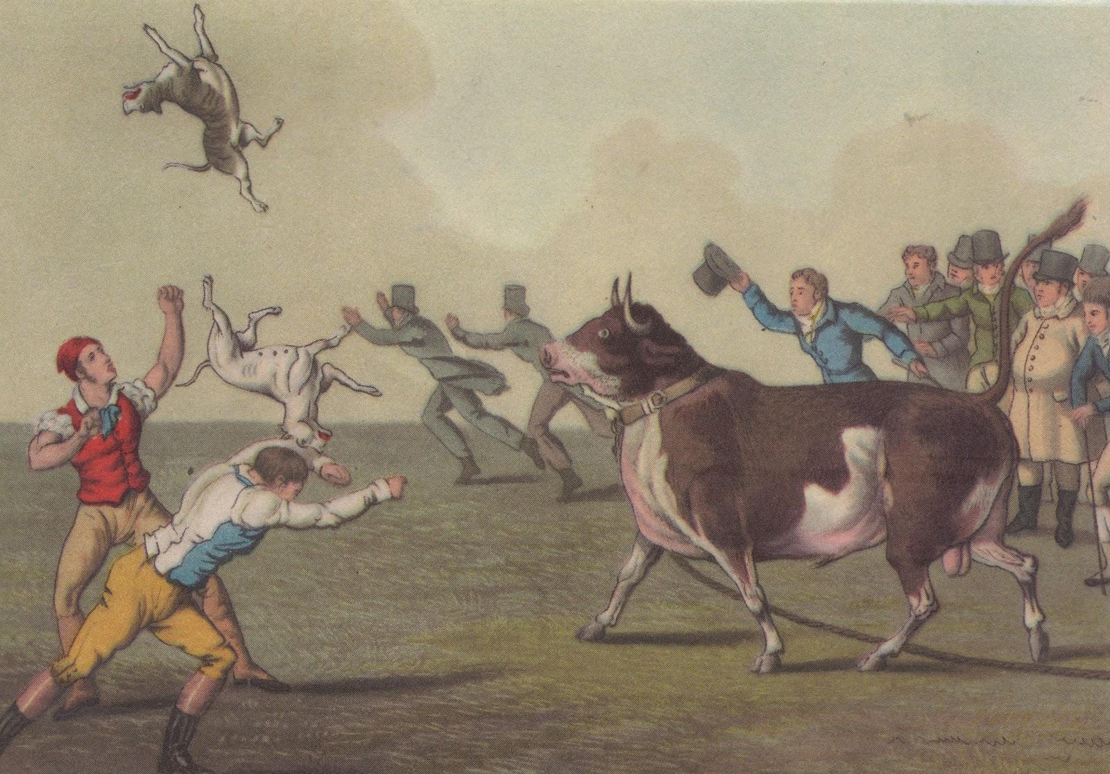 bull baiting 2.jpg