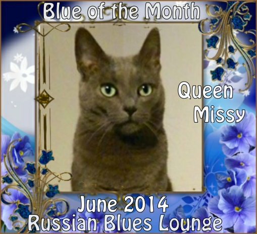 Blue of the Month on Catster