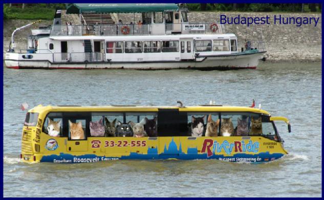Riding the Amphibious Bus