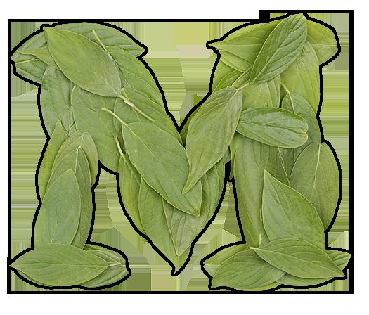cooper-leaf-poster2.png