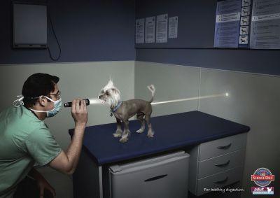 állatorvos morgás joga.jpg