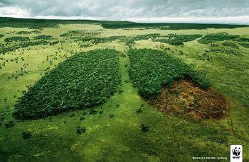 pusztuló esőerdő kicsi.jpg
