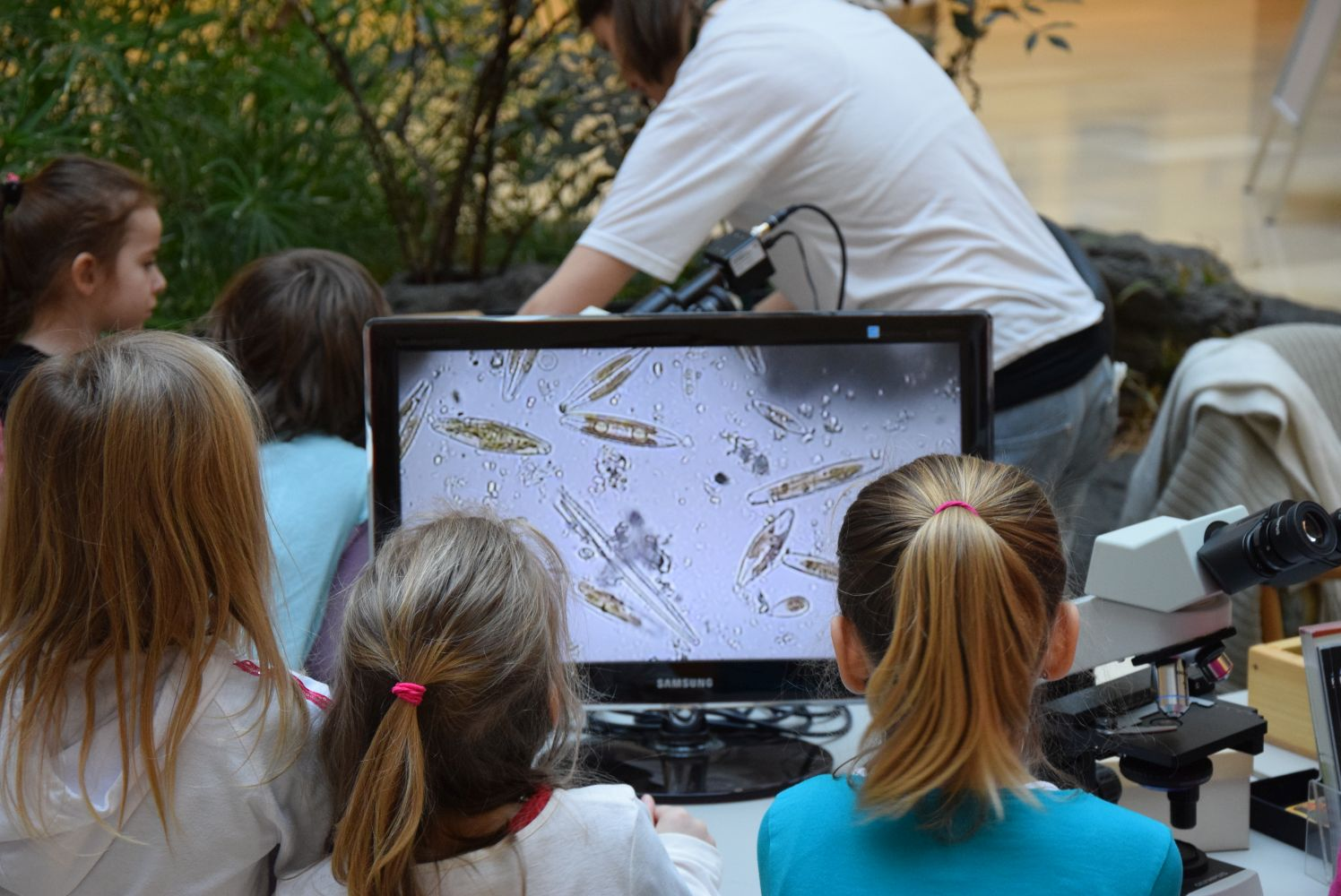 A vizek napszámosai: az algák - Víz hete a múzeumban