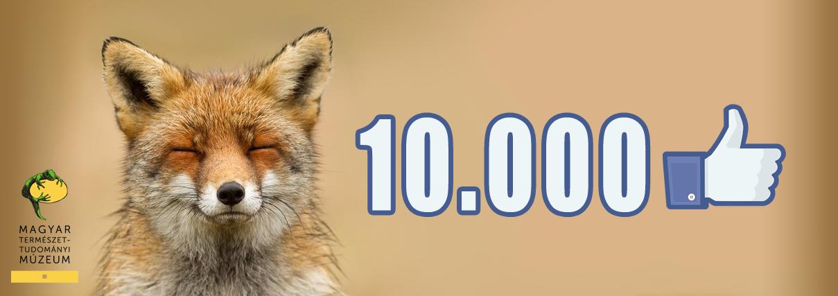 10 000. lájk