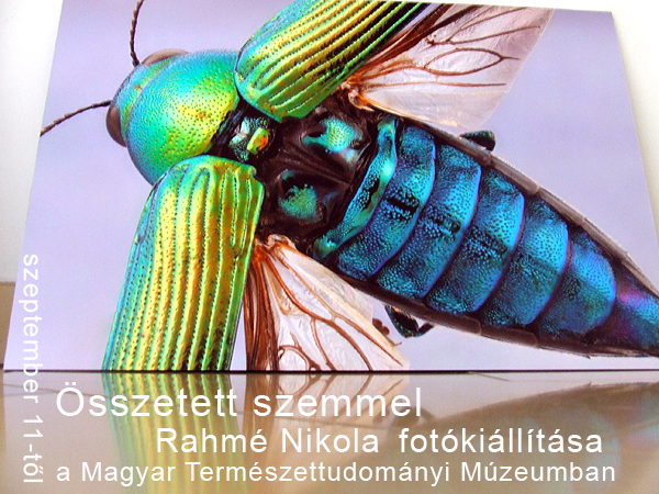 Összetett szemmel - Rahmé Nikola fotókiállítása