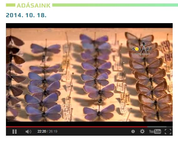 Novum: evolúció és matematika – avagy a lepkék hatása