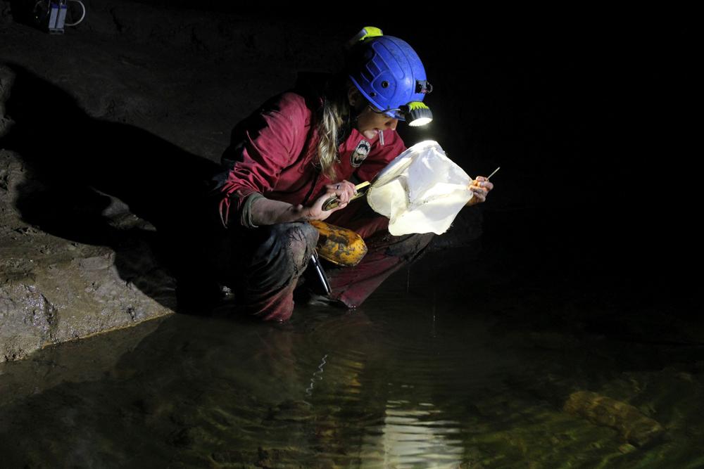 Barlangok mélyén kutatnak a magyar zoológusok – 1. rész