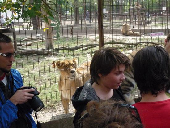 24_oroszlan2.jpg