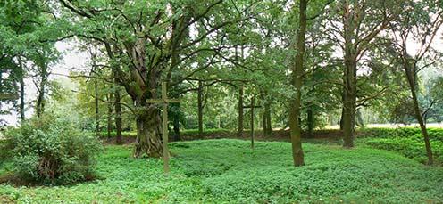 A Pawlówka melletti temető