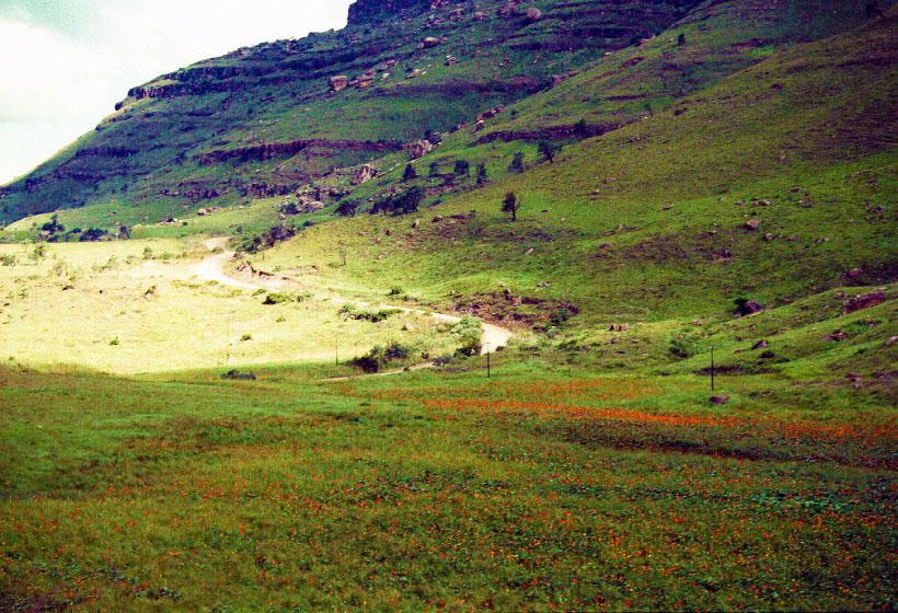 A fáklyaliliomok völgye.jpg