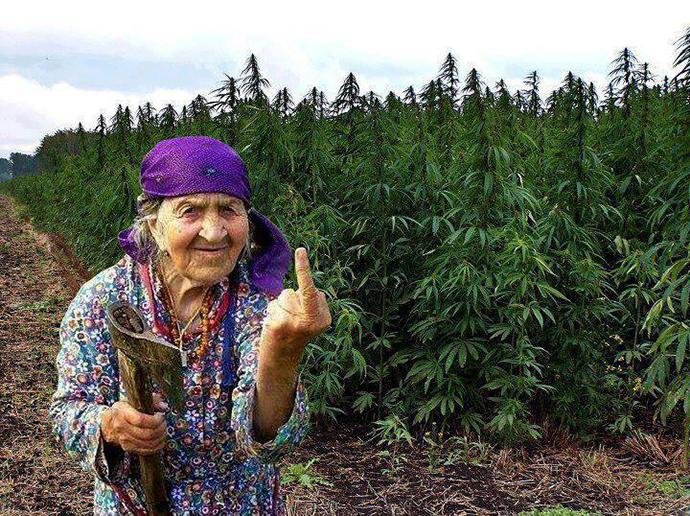 old-lady-finger-weed.jpg