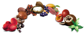 fruits-490x254.png