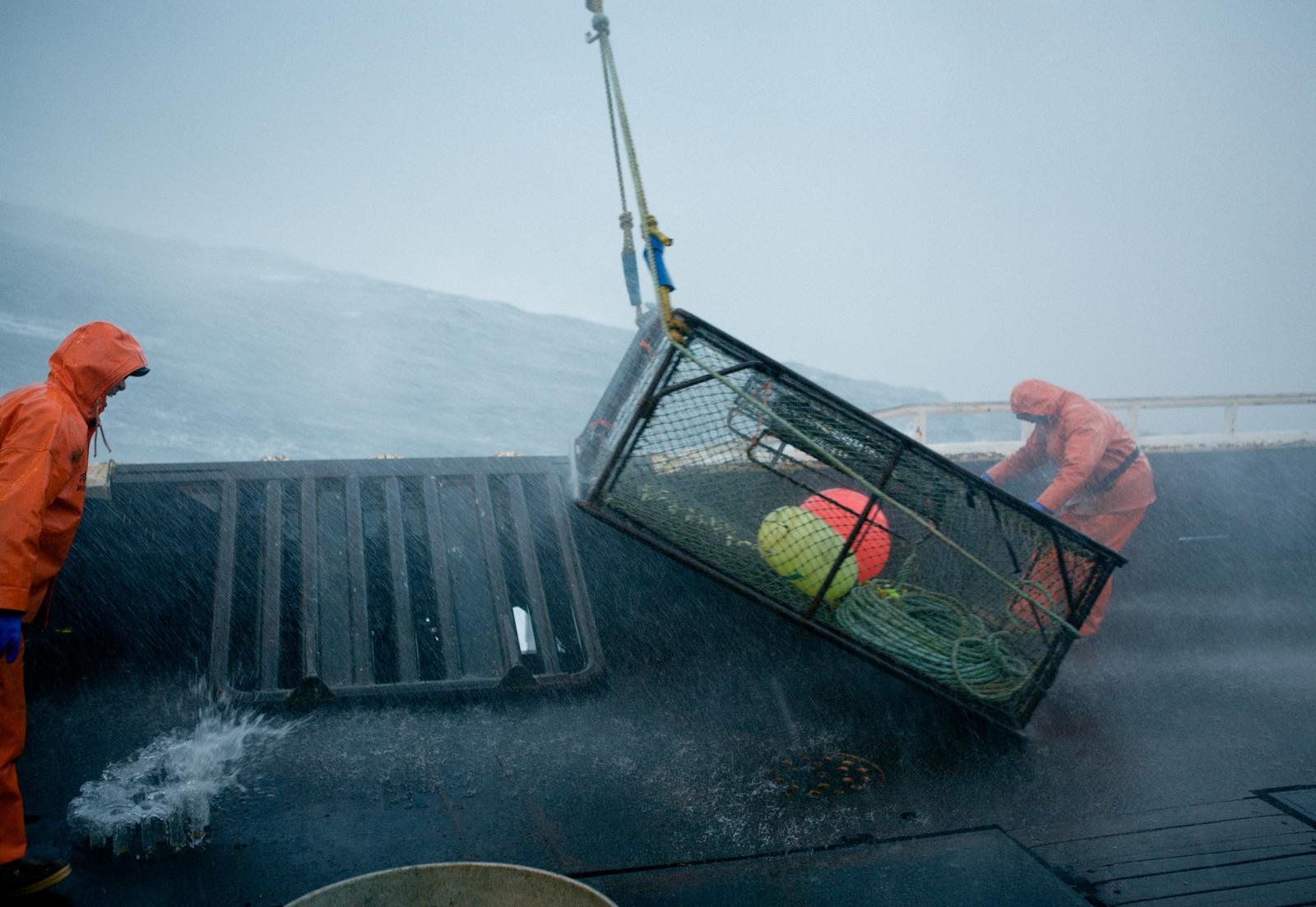 как ловить гребешка в баренцевом море