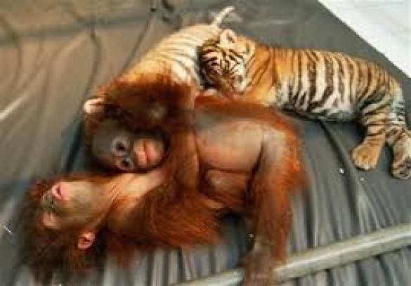állatok vn1.jpg