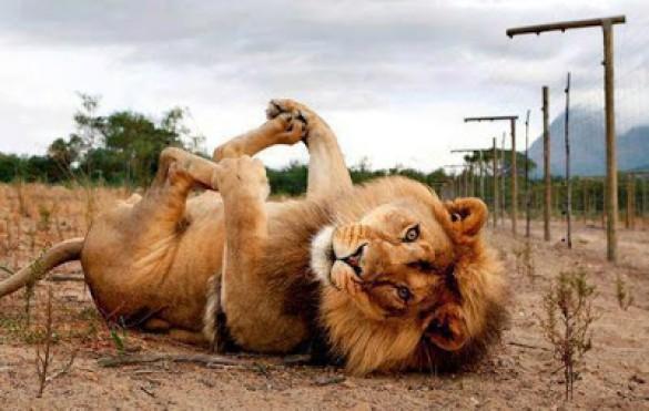 állatok vn8.jpg