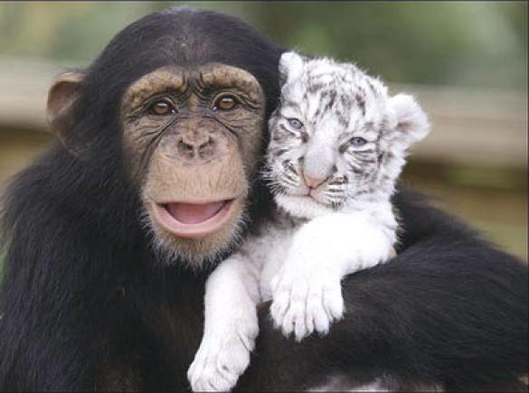 állatok vnfriends.jpg
