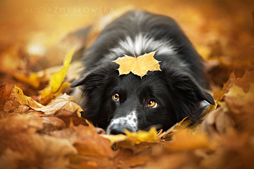 dog-photography-alicja-zmyslowska-2__880.jpg