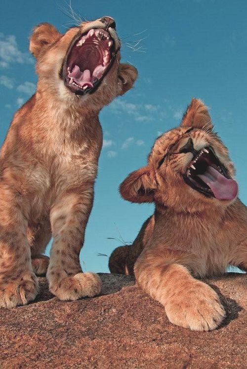 kis oroszlányok.jpg