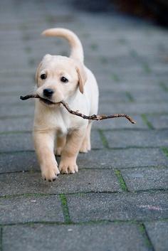 kutya bottal.jpg