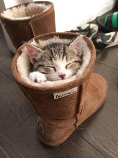 macska a csizmában.jpg