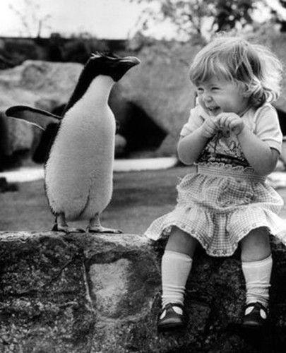 pingvines.jpg