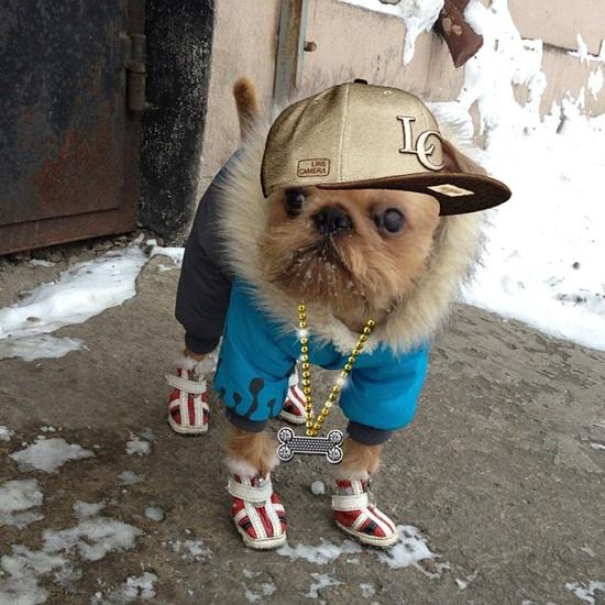rapper kutya.jpg