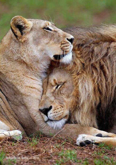 true love2.jpg