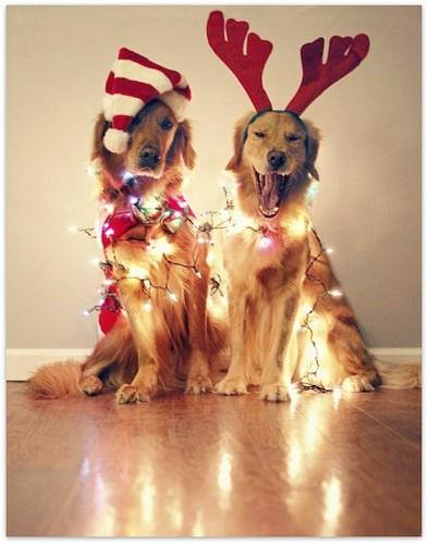villany kutyák.jpg