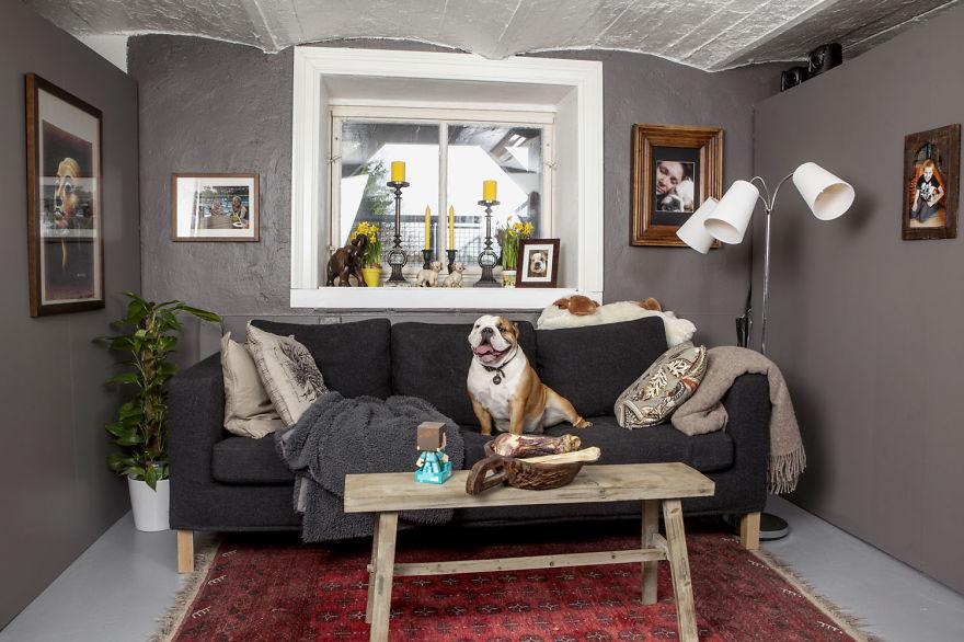 A-Bulldog-Love-Story__880.jpg
