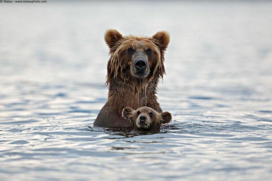 animal-parents-9.jpg
