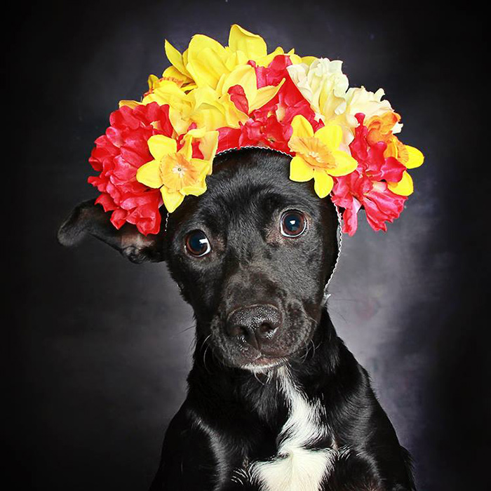 black-dog-portraits-floral-crown-guinnevere-shuster-8.jpg