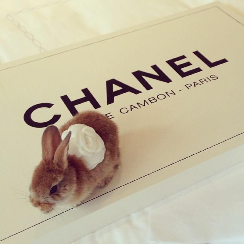 cecil-bunny-delevingne4.jpg