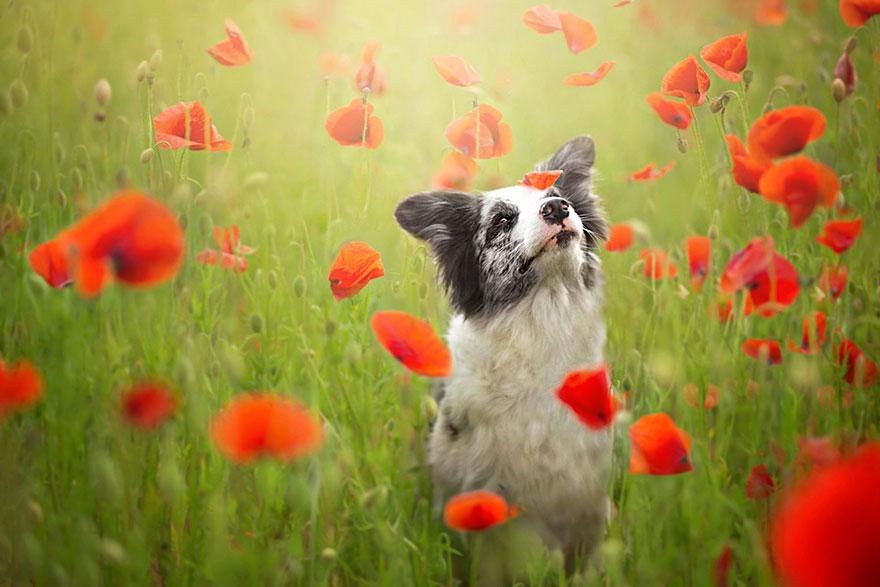 dog-photography-alicja-zmyslowska-4__880.jpg