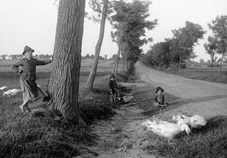 1900_libalegeltetes.jpg